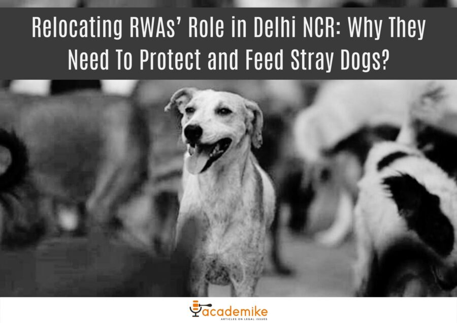Relocating RWAs' Role in Delhi NCR: Why They Need To Protect and Feed Stray Dogs?