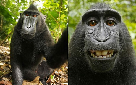 If a Monkey Clicks a Selfie, Does He/She Own the Copyright?