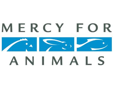 mercy for animals staff attorney job