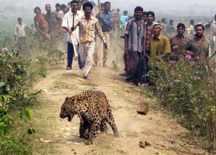Call for Papers: National Seminar on Human Wildlife Conflicts @ GLC Ernakulam [Mar 8-10]: Submit by Feb 20