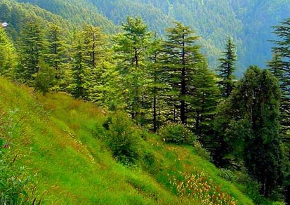 Workshop on Forest Rights Act: Prospects and Challenges for RAs of MPs [March 18, Delhi]: No Fee; Register by March 12
