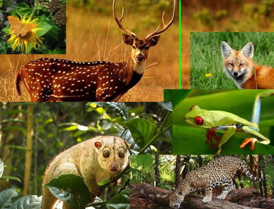 Bhavans Palsar Biodiversity Conference Kozhikode