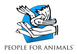 Internship Experience at People for Animals, Delhi: Animals Welfare and Environmental Laws Research Work