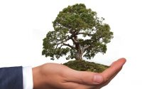 internship experience volunteers collective environmental laws