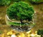 Internship opportunity at greenpeace